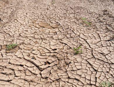 Le réchauffement climatique et son effet sur la santé de chacun